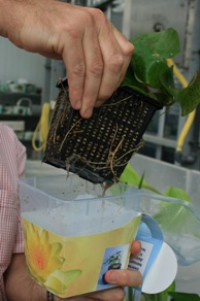 Innovation, Design et Végétal  pour réinventer l'offre produit