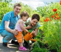 Secteur horticole : Les valeurs ajoutées du végétal pour le consommateur