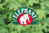 C'est l'histoire d'une pépinière de renom, d'un éléphant, et  ...